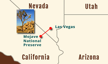 Mojave National Preserve 1-Day experience